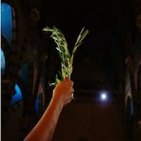 que-celebramos-el-domingo-de-ramos