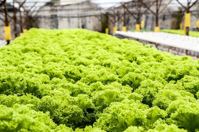 Curso de manejo de hortalizas en ambiente controlado