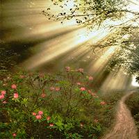 Creo en la vida eterna