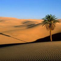 Voz que clama en el desierto