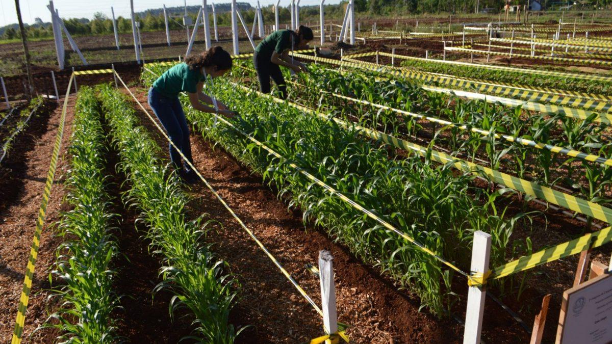 Maestría con Orientación a la Investigación en Producción Agrícola